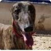 Adopt A Pet :: Fiddler - Aurora, OH