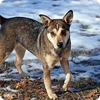 Adopt A Pet :: Nala D3509 - Shakopee, MN