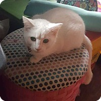 Adopt A Pet :: Aladdin - South Bend, IN