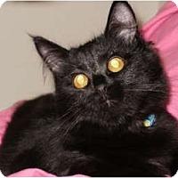 Adopt A Pet :: Caramel - Sterling Hgts, MI