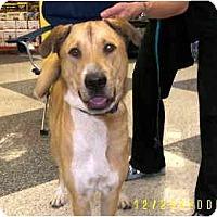 Adopt A Pet :: Noche - Scottsdale, AZ
