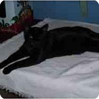Adopt A Pet :: Budleah - Hamburg, NY