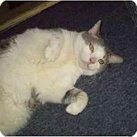 Adopt A Pet :: Kasie - Pasadena, CA