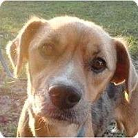 Adopt A Pet :: Mendy - P, ME