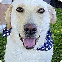 Adopt A Pet :: Samson fam dog - Sacramento, CA