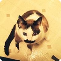 Adopt A Pet :: Hattie - Vancouver, BC