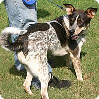 Adopt A Pet :: Odie - Huntsville, AL