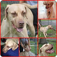 Adopt A Pet :: ZION - Davenport, FL
