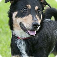 Adopt A Pet :: Gary - Norwalk, CT