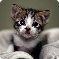 Adopt A Pet :: Danielle & Mariah - Brockton, MA