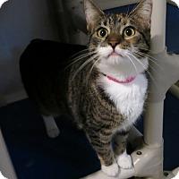 Adopt A Pet :: Madonna - Geneseo, IL