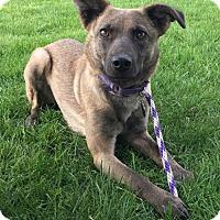 Adopt A Pet :: Godiva - Jarrettsville, MD