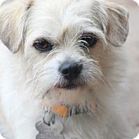 Adopt A Pet :: Mindy Lou - Woonsocket, RI