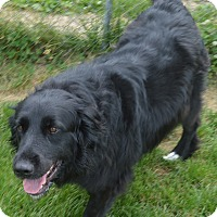 Adopt A Pet :: Shadow - Prole, IA