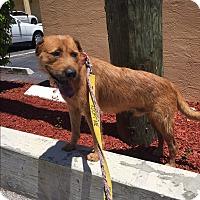 Adopt A Pet :: Poochie - Ft. Lauderdale, FL