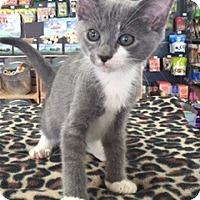 Adopt A Pet :: Miles - McKinney, TX
