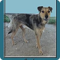 Adopt A Pet :: Gunter - Hillsboro, TX