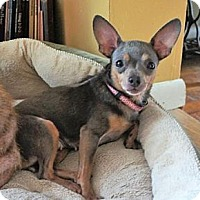 Adopt A Pet :: Francesca - Doylestown, PA
