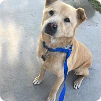 Adopt A Pet :: Donny - Chico, CA