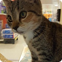 Adopt A Pet :: Checkers - Woodbury, NJ