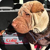 Adopt A Pet :: Mason - Mira Loma, CA