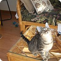 Adopt A Pet :: Daisey - St. Louis, MO