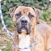 Adopt A Pet :: Ribeye - Adrian, MI