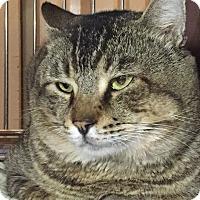 Adopt A Pet :: Caesar - Apache Junction, AZ