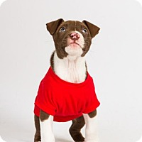 Adopt A Pet :: JT - Richmond, VA