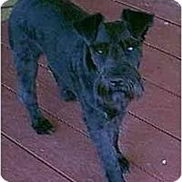 Adopt A Pet :: Kayla - dewey, AZ