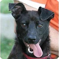 Adopt A Pet :: Skipper - kennebunkport, ME