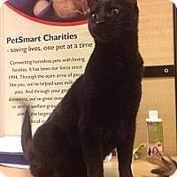 Adopt A Pet :: Onyx - Modesto, CA
