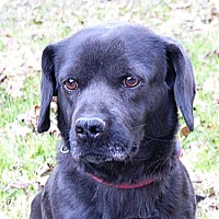 Adopt A Pet :: Sherman - Mocksville, NC