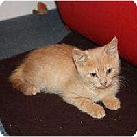 Adopt A Pet :: Mustard (LE) - Little Falls, NJ