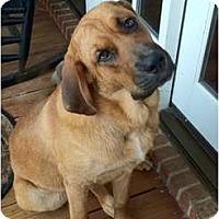 Adopt A Pet :: Sherlock - Carrollton, GA