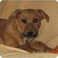 Adopt A Pet :: Chase - Golden Valley, AZ