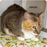 Adopt A Pet :: Pooch - Jacksonville, FL