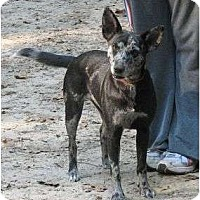Adopt A Pet :: Calypso cs - Thomaston, GA