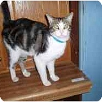 Adopt A Pet :: Carl - Hamburg, NY