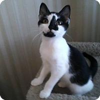Adopt A Pet :: Kip - Berkeley Hts, NJ