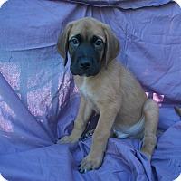 Adopt A Pet :: Roland - Phoenix, AZ