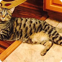 Adopt A Pet :: Stuart - Xenia, OH