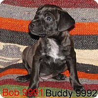 Adopt A Pet :: Bob - baltimore, MD