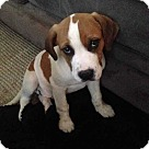 Adopt A Pet :: Rumpy