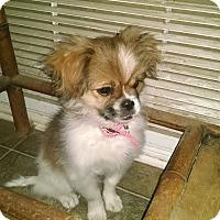 Adopt A Pet :: April - Simi Valley, CA