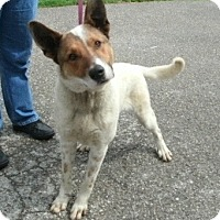 Adopt A Pet :: Toby-prison Obediance trained - Hazard, KY
