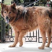 Adopt A Pet :: Nelson - Dublin, VA