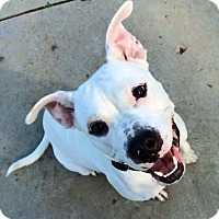 Adopt A Pet :: Loni Anderson - Troy, MI