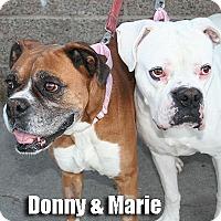 Adopt A Pet :: Marie - Encino, CA