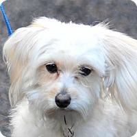 Adopt A Pet :: Bobby - Vernonia, OR